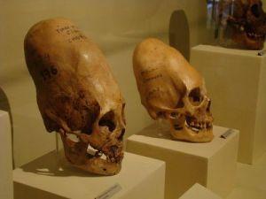 Nephilim Skulls1