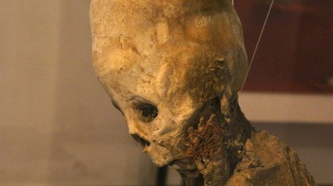 75 Huaytara Elongated Child Skull