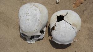 Chongos skull
